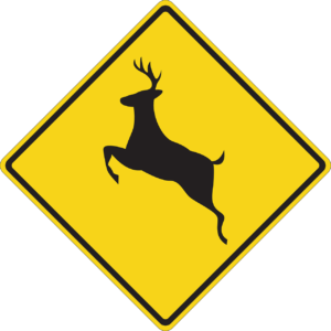How to lower your risk for a deer collision in Ohio